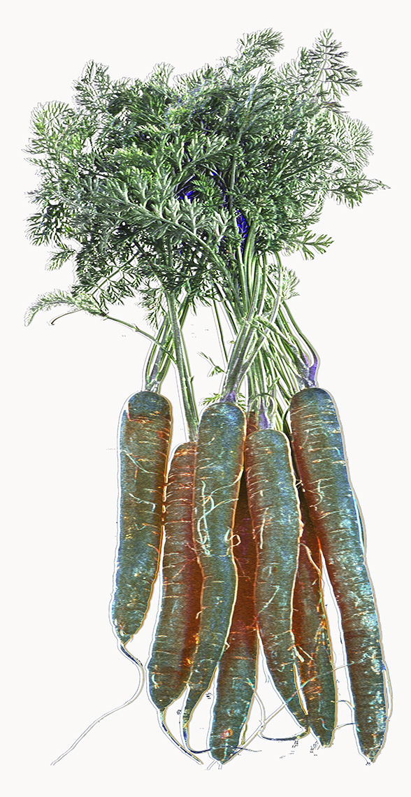 The SVD of a Bunch of Carrots